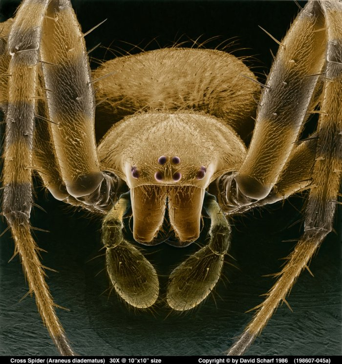 198607-045a-Cross-Spider1