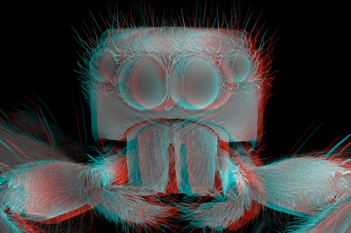 199703-001-3D-Jumping-Spider1